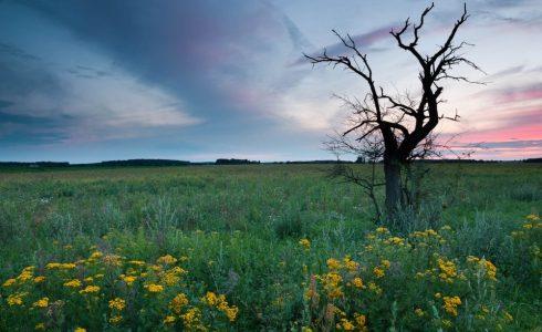 Umgebung (Foto: Martin Hinrichs)